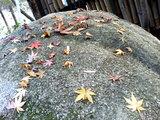 岩に落ち葉