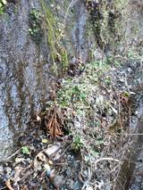 側溝のゴミ
