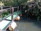 浮島の森(浮き橋)