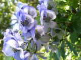 『ボッケ遊歩道』に咲く花