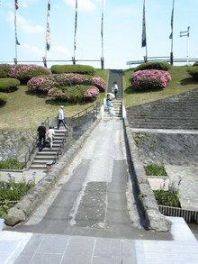 高瀬裏川花しょうぶ(8)