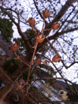 木の実(種)