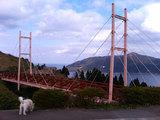 公園から見た金華山