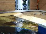 『ウミガメ資料館』のウミガメ