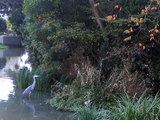 浮島の森(青鷺)