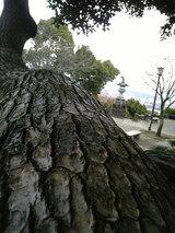 本妙寺公園(2)