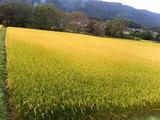 折爪の田園風景