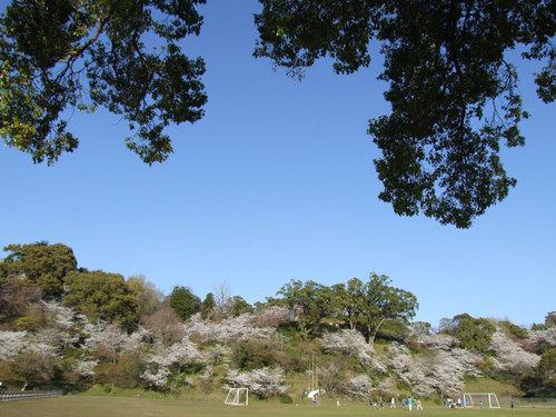菊池の桜2010-12