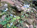 那智の大滝(お花)