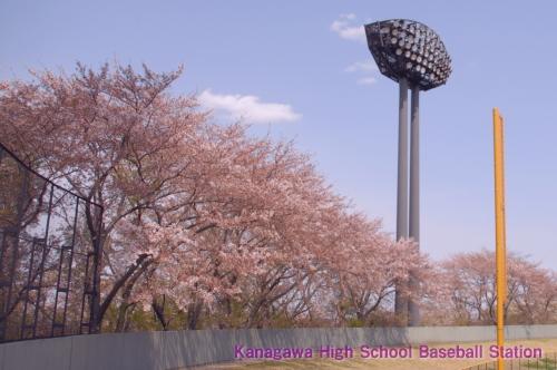 左桜席 2006.04.09