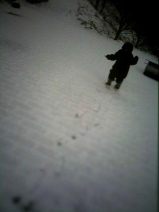雪やこんこん。