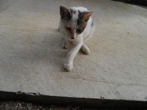 迷い猫 002