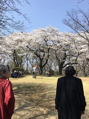 桜の下のトーク