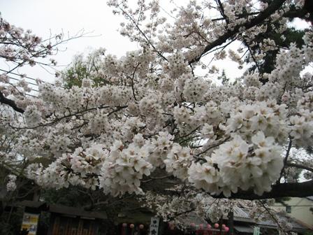 4月京都2