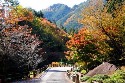 autumn_0814