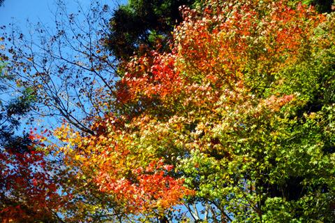 autumn_0818