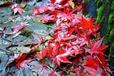 autumn_0810