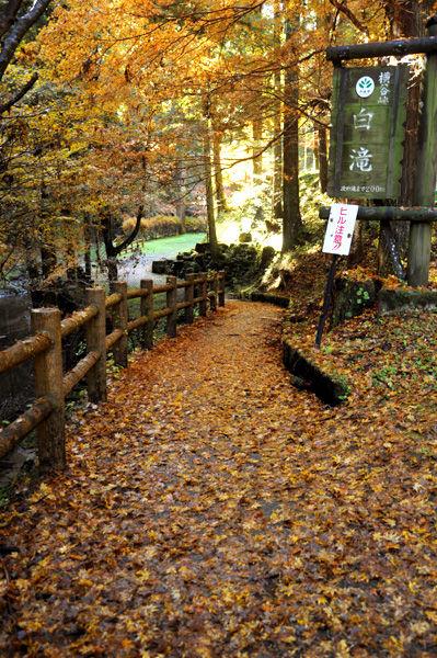 autumn_0811