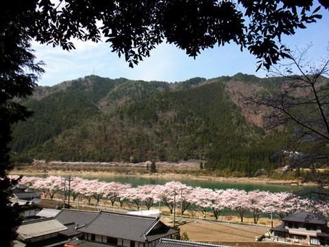 kanayama_sakura_hassaka02