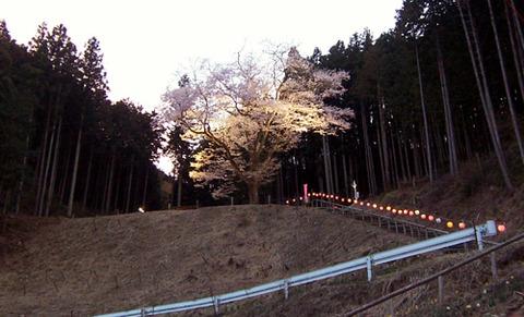 kanayamasakura_takemi08