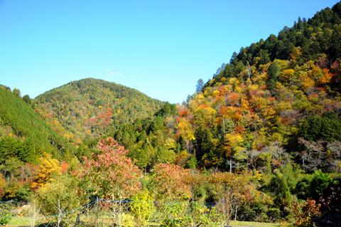 autumn_0808