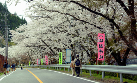 sakura0412_hassaka02