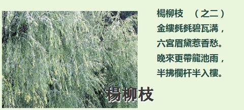 楊柳枝002