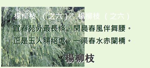 楊柳枝0006