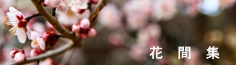 花間集 白梅