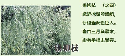 楊柳枝004