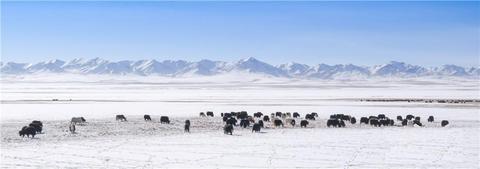 春雪に草原に集まる動物002
