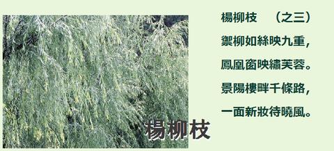 楊柳枝003