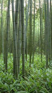 bamb05176