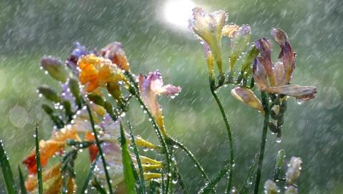 秋雨 02