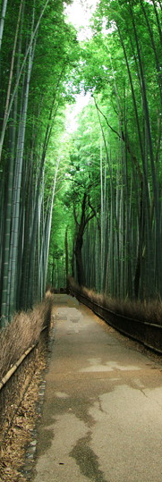竹林0021