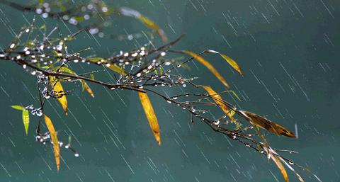 秋雨 04