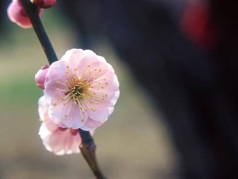 Flower1-005