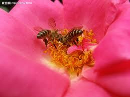 花蕊と蜂01