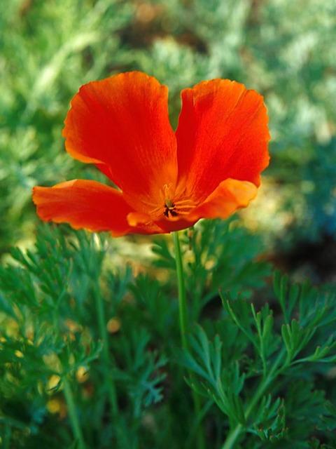 Flower1-001