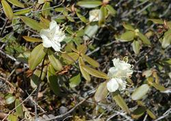 urajirohikagetsutsuji2006-05-03-01