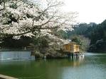 鎌北湖_桜
