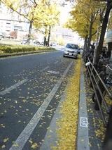 御堂筋黄葉2007 12月 3