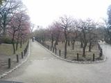 2008年2月6日梅林公園