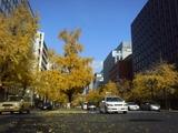 御堂筋黄葉2007 12月 1