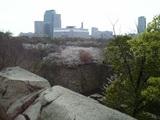 大阪城堀からの桜風景