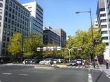 御堂筋黄葉2007