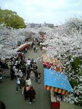 大川川沿い桜風景