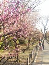 大阪城梅林の風景 2009年1月