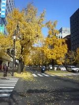 御堂筋黄葉2007 12月 2