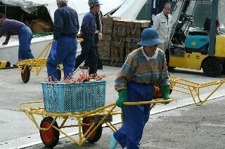 漁船から陸揚げされ運ばれるカニ